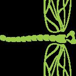 Dragonfly - full